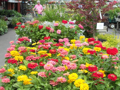 Waynesboro landscape garden center video image gallery proview seasonal flowers workwithnaturefo