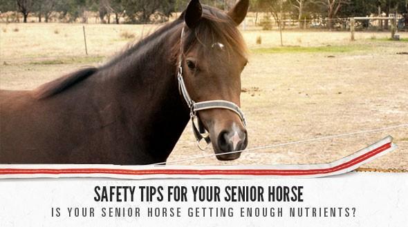horse fall ad