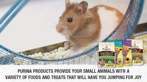 small animal ad