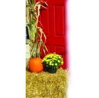 Fall Decorating Kits at Plymouth Nursery