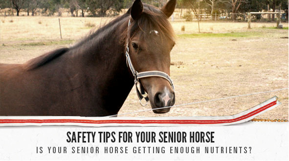 Equine Senior slider