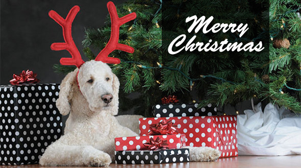 Merry Christmas dog