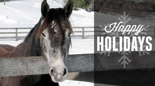 Happy Holidays horse
