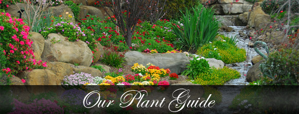Our Plant Guide