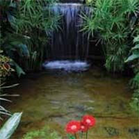 Build a Medium Pond With a Waterfall
