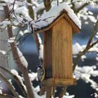Build a Wooden Bird Feeder