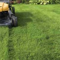 Cut a Healthy Lawn