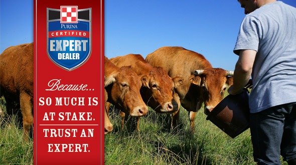 Cattle Certified Expert Dealer Slider