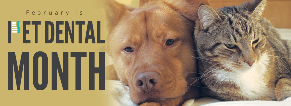 Pet Dental Month