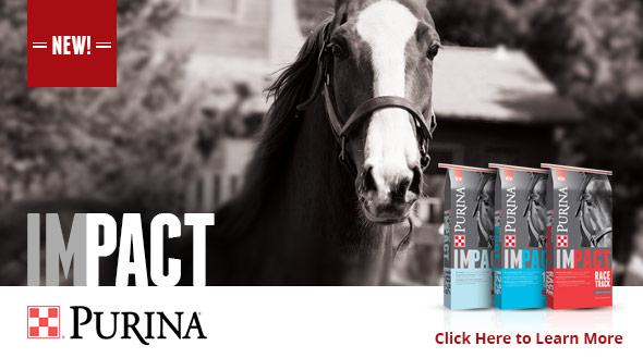 Impact Horse Feeds