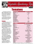 Tomato Gardening Tips from LSU Ag Center