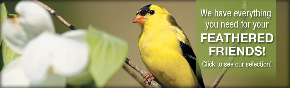 Bird Slider