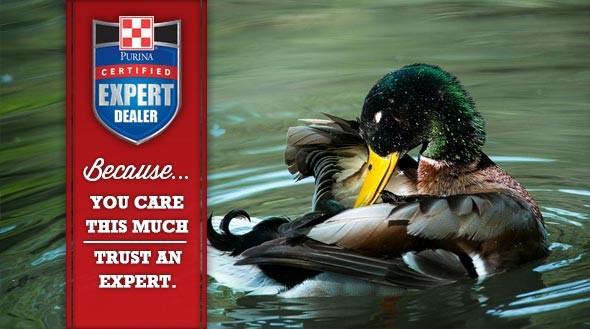 Duck slider