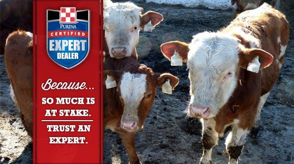 Certified Expert Dealer Cattle Slider