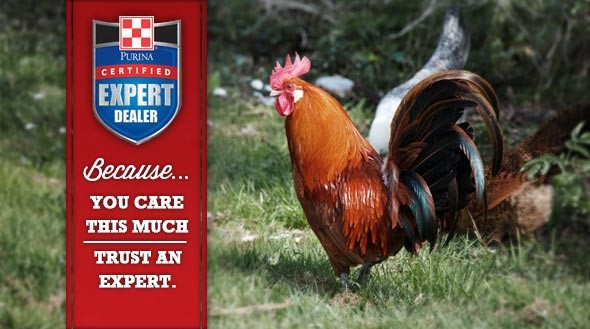 Certified Expert Dealer Poultry Slider