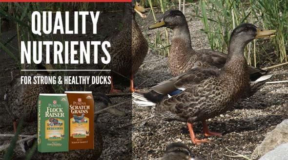 Quality Nutrients