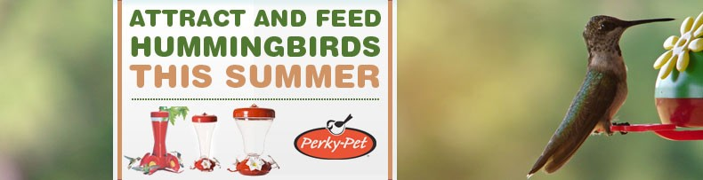 Perky Pet Hummingbirds