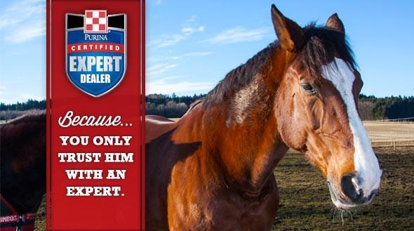 Horse ad