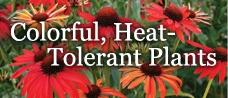 Heat Tolerant