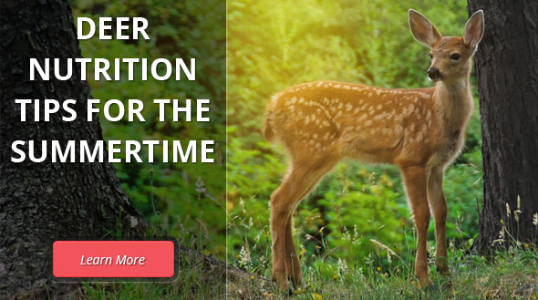Deer Nutrition for the Summertime