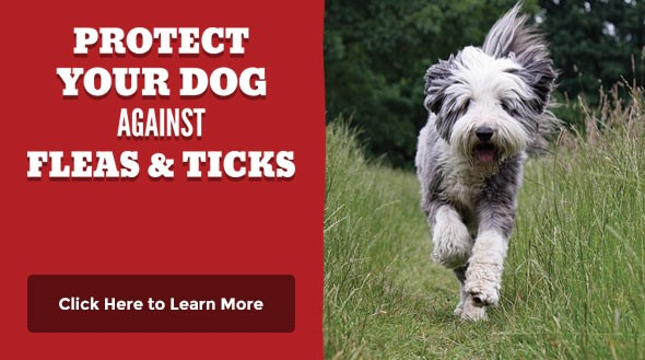 Protect Against Fleas and Ticks