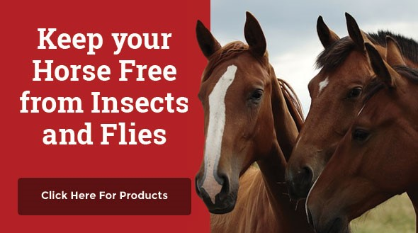 horse free from insects and flies