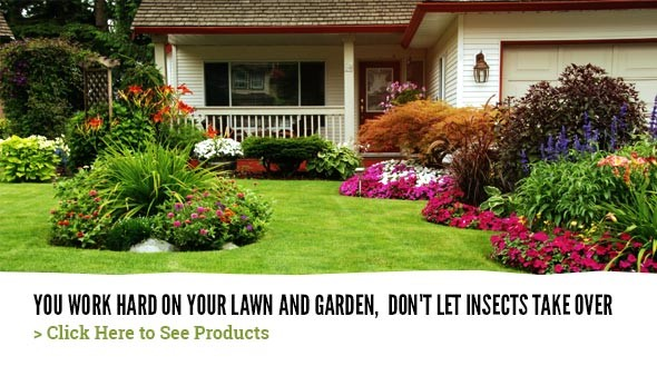 Don't let insects take over