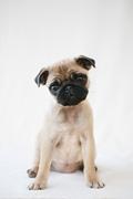 Danbury Agway VIP Pet Clinic