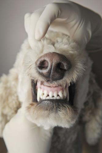 Candlewood Agway VIP Pet Clinic