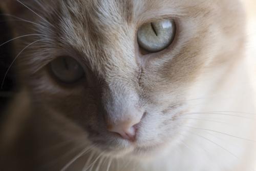 Torrington Agway VIP Pet Care Clinic