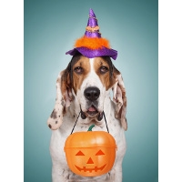 20% off Halloween Costumes