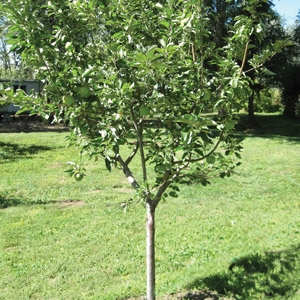 75% Off All Trees and Shrubs
