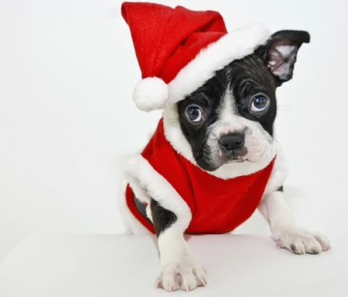 20% Off All Dog and Cat Christmas Items