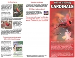 Tips for Attracting Cardinals