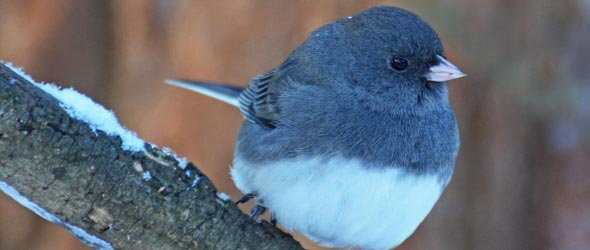 Winter Birds In Pennsylvania – Wonderful Image Gallery
