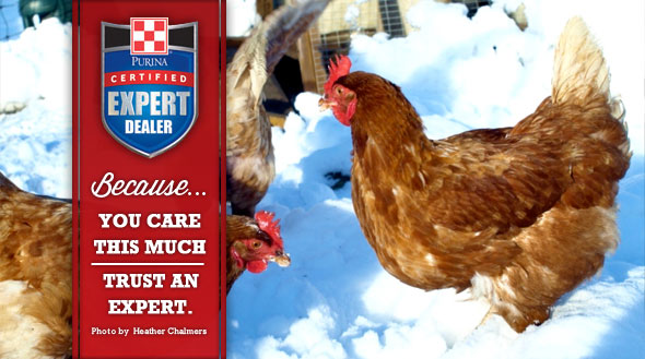 Winter Poultry