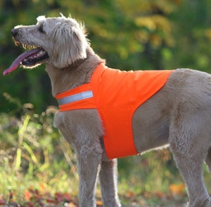 Save 20% on All Dog Apparel