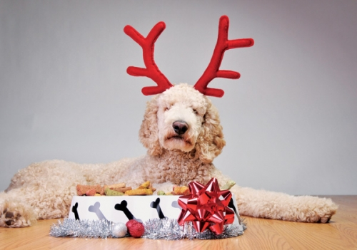 15% off All Christmas Toys