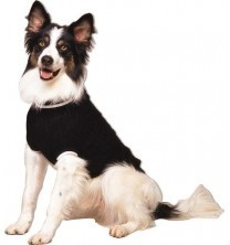 10% off all Outdoor Dog Brand Dog Sweaters