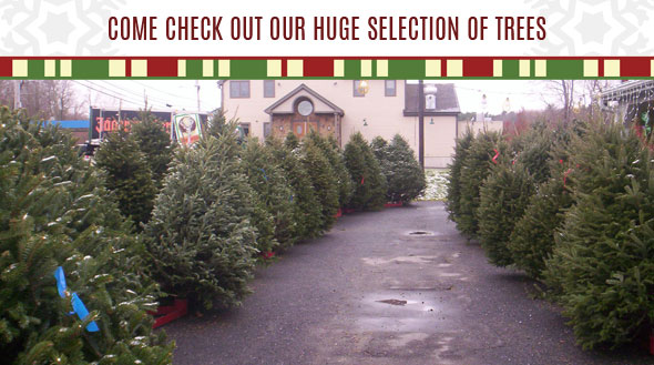 Bay State Christmas Trees