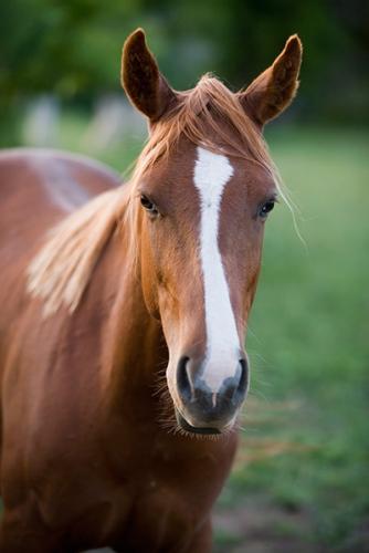 RCC Spring Spree - Open Horse Show Series