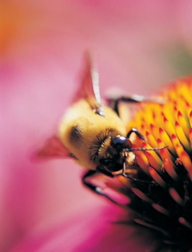 Green College Class: Mason Bees for Pollination