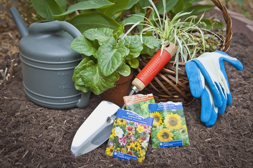 Starting Your Veggie Garden (from Seed) 11am-Noon & 1pm-2pm