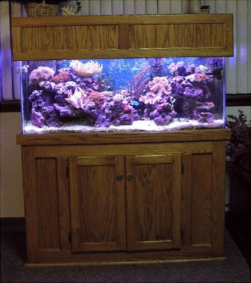 how to clean a fish tank before adding fish