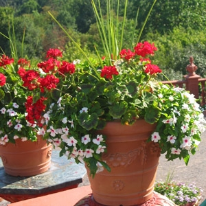 Container Gardening with Andy from Lady Bug Brand at 9:30AM