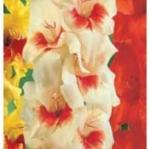 20% off Gladiolus & Dahlia Bulbs
