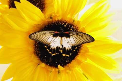 'Hummingbird & Butterfly' Classes are 11am - Noon & 1-2pm