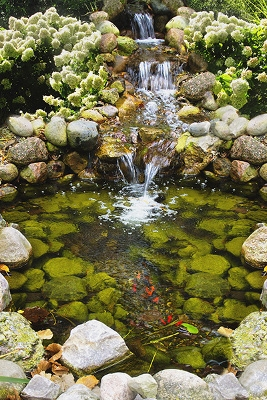 'Pond Care' Classes at 11am - Noon & 1-2pm