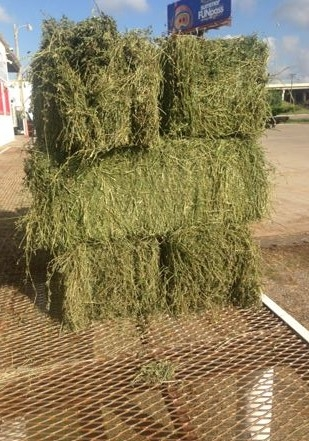 Two Strand Alfalfa for $14.99