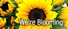 We're Blooming!